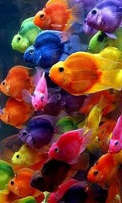 Colorful_Fishes.